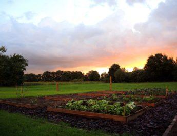 A kertek szerelmesei jövőre is bizonyíthatnak